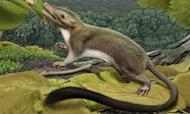 Furry Insect-Eating 'Human Ancestor' Revealed