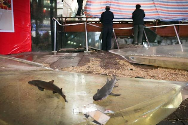 Two small sharks are shown lying on the ground after a 33-ton tank exploded in a shopping centre in Shanghai on December 18, 2012. Dramatic video footage captured the moment when the tank broke, engulfing onlookers in a torrent of water and glass and injuring 15 people