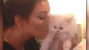 Kim K. Heart Broken Over Death of Cat