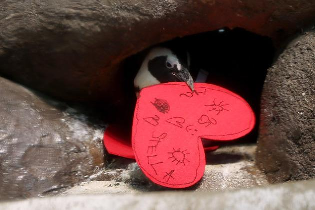 Animals in love on Valentine's DayValentine's Day Celebrated At California Of Sciences