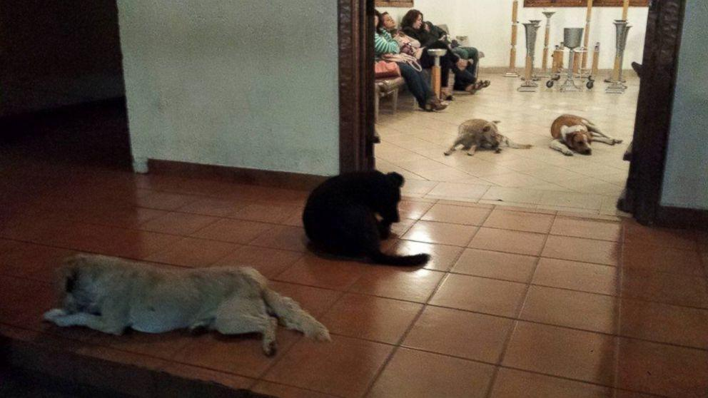 Pack of Stray Dogs Stand Guard at Animal Lover's Funeral