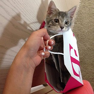 Master Spy Cats Reveal The Secrets To Feline Stealth! image Bag Cat.jpg