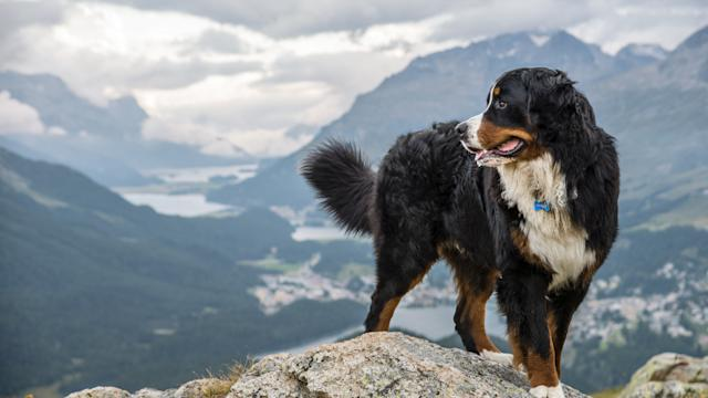 7 Reasons You Should Take Your Dog Camping