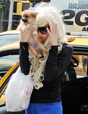 Amanda Bynes' Dog Soaked in Gasoline, Burned After Driveway Fire: Report