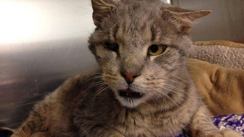 Meet Zeb, the Adorably Ugly One-Eyed, Four-Toothed Senior Cat