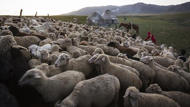 Champions League - Kazakh club warned by UEFA over sheep slaughter