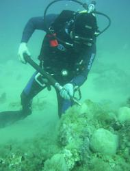 Scientists from UGA and the National Oceanic and Atmospheric Administration discovered and fully recovered a large fossilized whalebone near Gray's Reef National Marine Sanctuary approximately 20 miles off the Georgia coast in 2008.