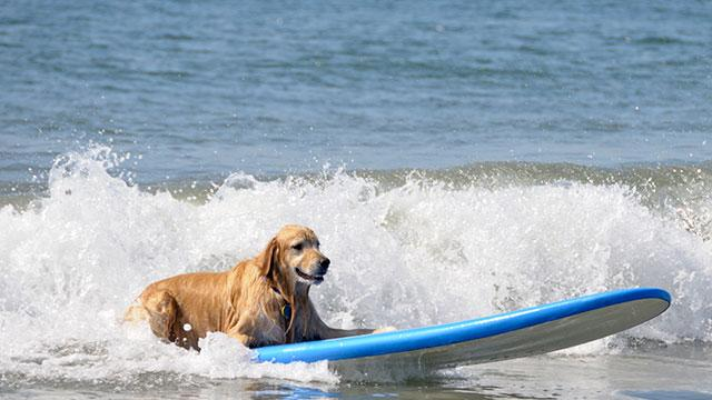 $73,000 Dog Vacation Is World's 'Most Spectacular'