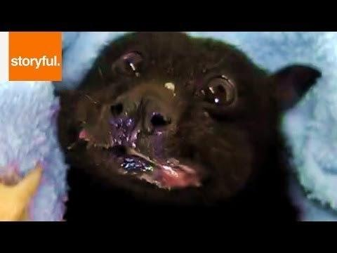 Rescued Fruit Bat's Happiness Returns With a Banana