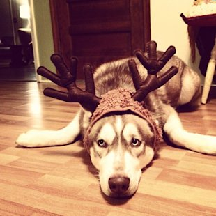 10 Animals Who Refuse To Get Into The Christmas Spirit image animals who hate christmas 2.jpg