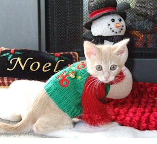 Kitten Christmas Sweater.These 26 Cats Wearing Christmas Sweaters Will Put A Smile On
