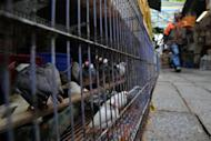 File photo shows a man walking past caged birds in Hong Kong. Hong Kong health authorities has urged the public not to panic after the southern Chinese city reported its first human case of bird flu in 18 months in a two-year-old boy