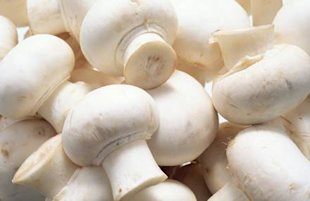Around 100 species of mushrooms are said to be dangerous to humans