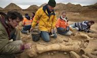 Woolly Mammoth Skeleton Unearthed Near Paris