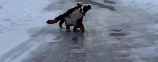 Dogs caught on video having a winter blast