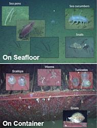 Scientists found that the makeup of aquatic life looked different around the sunken shipping container than it did in the surrounding seafloor.