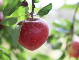 8-ways-to-save-money-on-costly-lawn-care-3-fruit-trees-lg