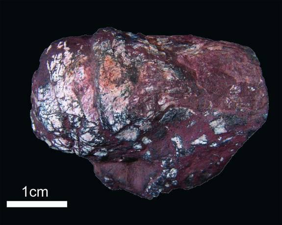 Fossilized shark poop, called a coprolite (shown here), was found to contain ancient tapeworm eggs.