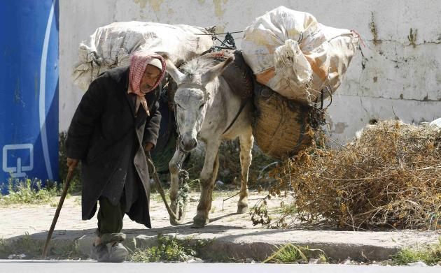 An elderly man leads a donkey in the capital in Tunisia