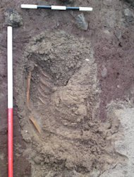 Skeletal remains uncovered by storms