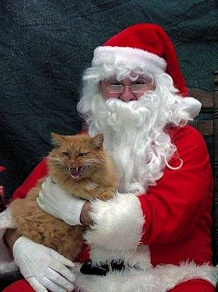 10 Animals Who Refuse To Get Into The Christmas Spirit image Cat.jpg