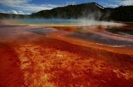 Animals Fleeing Yellowstone Does Not Indicate Imminent Eruption, Scientists Confirm