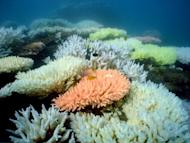An undated handout photo received from Australian Institute of Marine Science on October 2, 2012 shows bleaching on a coral reef at Halfway Island in Australia's Great Barrier Reef