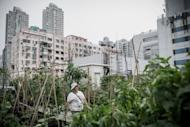 A woman walks past vegetable boxes at City Farm, an organic farm set up on the rooftop of a tower block in Hong Kong. With most of the southern Chinese territory's seven million people living in tower blocks and land prices sky-high, unused roofs are some of the few places in the most heavily populated areas for budding vegetable gardeners