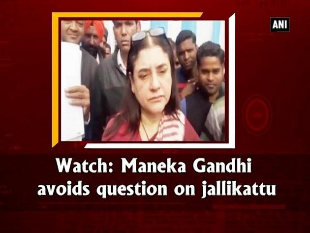 Watch: Maneka Gandhi avoids question on jallikattu