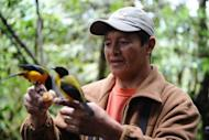 """Angel Paz, a native guide, holds a Black Chinned Mountain Tanager at his private reserve in Ecuador. Six months after the creation of his """"Peace of the Birds"""" refuge, it has already attracted bird-watching enthusiasts from around the world"""