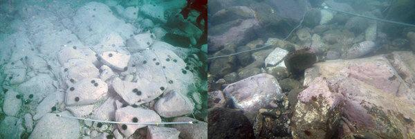 Underwater photographs of a rocky shore area at Tomarihama in northeastern Japan. On the left, sea urchins (Strongylocentrotus nudus) before the tsunami on Nov. 11, 2010. On the right, the area after the event (on June 8, 2011), with large rock