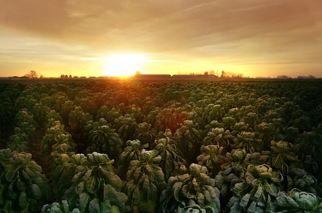 The glorious sunrise scene in Lincolnshire (Caters)