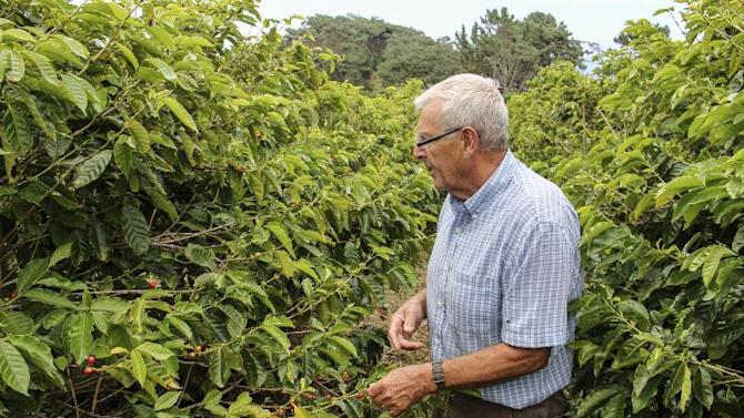 Bill Bolton, 74, a pensioner from Britain who has lived in Saint Helena since 1991, walks in his coffee plantation in Jamestown on March 14, 2015