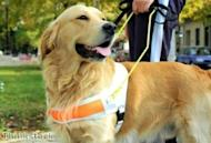 Criminalising dog fights: MPs demand harsh guide dog protections