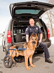disabled dog with police officer by a truck