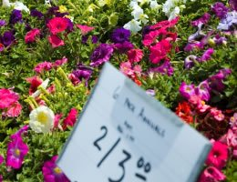 8-ways-to-save-money-on-costly-lawn-care-9-plant-sales-lg