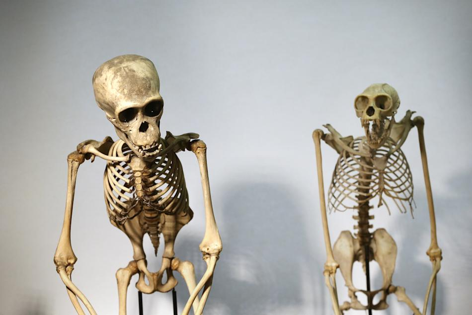 The Grant Museum Of Zoology Houses A Collection Of Weird And Wonderful Artefacts