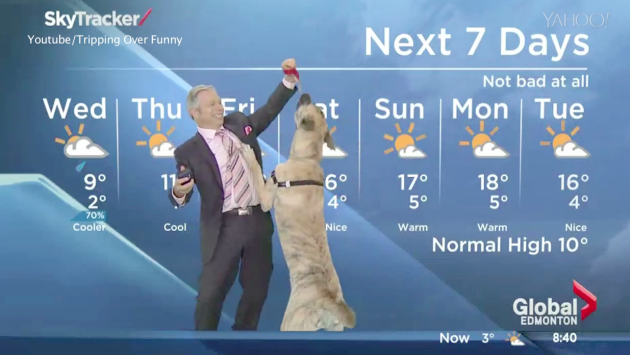 Mike Sobel and Ripple deliver the weather at Global Edmonton Morning News.