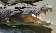 Crocodile Attacks Boy Swimming In Australia