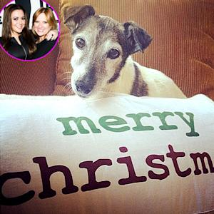 Caroline Manzo's Dog Dies on Christmas, Family Mourns Beloved Pet Via Twitter, Instagram