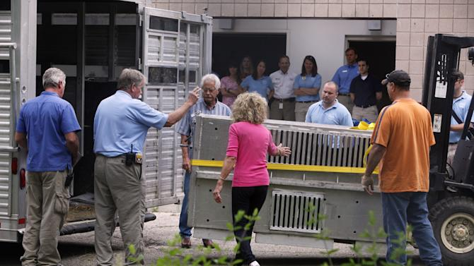Workers transport an animal from the Columbus Zoo in Columbus, Ohio on Friday, May 4, 2012 as Marian Thompson, center, touches the cage, to bring it back to Zanesville, Ohio. Thompson is the widow of Terry Thompson, who released 56 animals, including black bears, mountain lions and Bengal tigers, from his eastern Ohio farm Oct. 18 before he committed suicide. Five of the surviving animals, two leopards, two primates and a bear have been held at the Columbus zoo since October, when state officials had ordered that the animals be quarantined on suspicion of infectious diseases. That order was lifted on Monday by Ohio's agriculture director.   (AP Photo/The Columbus Dispatch, Tom Dodge)