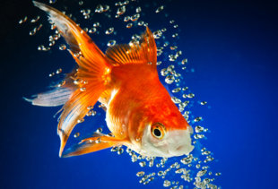 Short form Content: Less Time, More Impact image Goldfish.sm