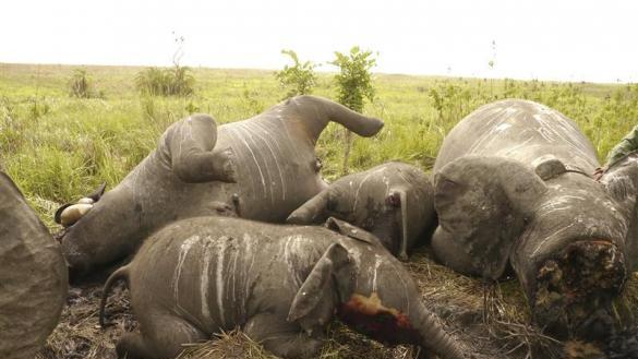 Africa's poaching problem