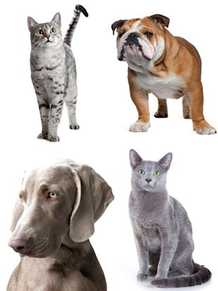 History of Dogs and Cats