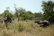 An environmental crime investigator walks past the carcass of a rhinoceros killed by poachers at Houtboschrand in the southern part of Kruger National Park, northeastern South Africa, on November 27, 2013