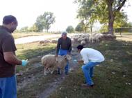 Dr. Neil Vora (in white shirt) investigates an orthopoxvirus outbreak among livestock in the country of Georgia.