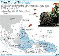 The Coral Triangle that covers Indonesia, the Philippines and Papua New Guinea. A new study of Asia's Coral Triangle, which contains nearly 30 percent of the world's reefs, shows that when it comes to ensuring a rich and diverse range of species, size matters