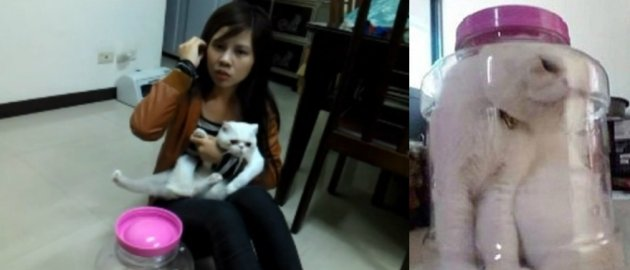 This Taiwanese college student crammed her cat in a jar