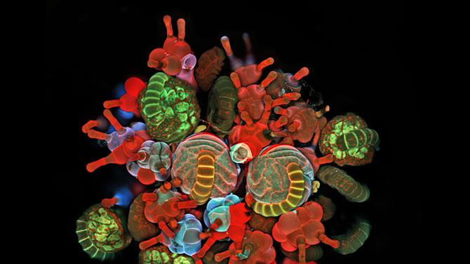 Microscopic photos