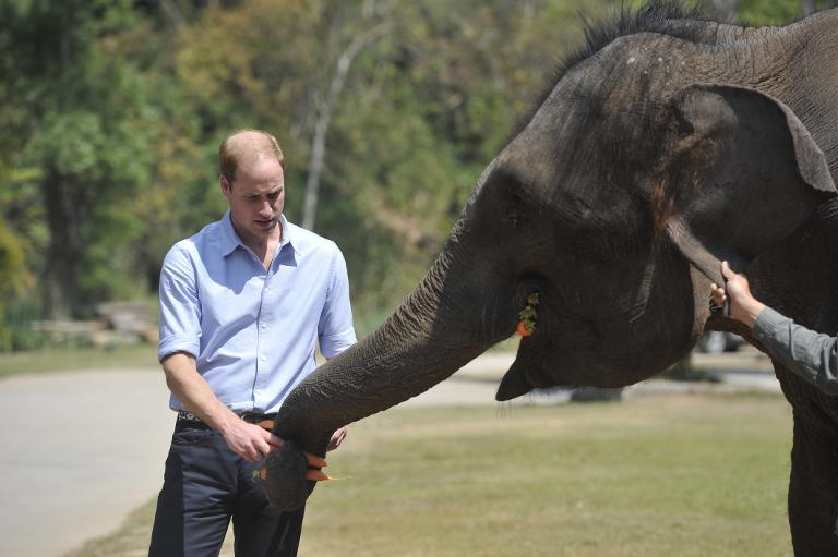 Britain's Prince William feeds a baby elephant at a sanctuary in Xishuangbanna, southwest China's Yunnan province on March 4, 2015